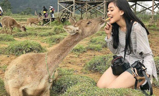 10 Foto Ranca Upas Bandung Oktober 2020 Tiket Masuk Wisata Harga Camping Ground Sewa Tenda Prewedding Jejakpiknik Com