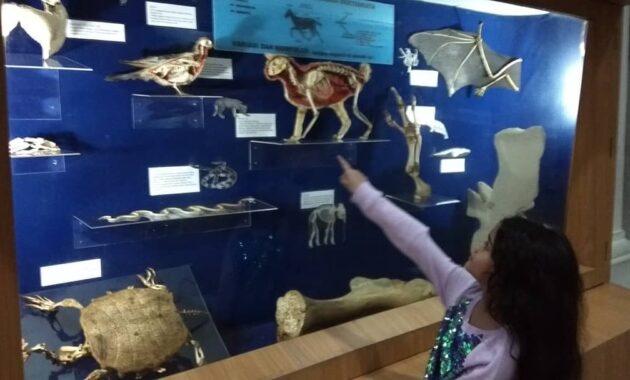 10 Gambar Museum Zoologi Bogor Harga Tiket Masuk Sejarah