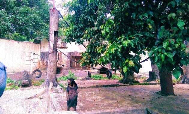 10 Gambar Kebun Binatang Ragunan Jakarta Harga Tiket Masuk Fasilitas Peta Alamat Denah Sewa Pendopo Jejakpiknik Com
