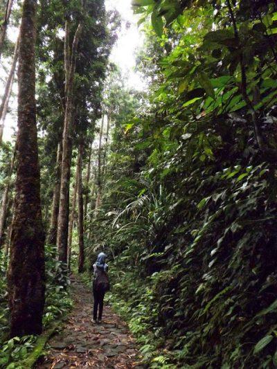 Hutan   Foto: nikaresti.blogspot.co.id
