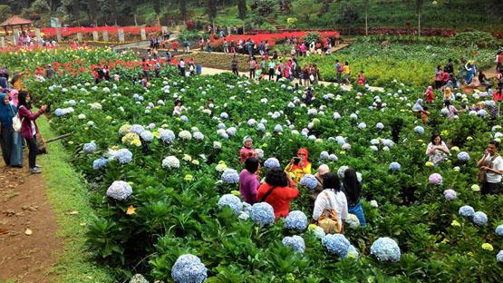 Jangan Foto di Tanaman | Foto: panoramacantik.blogspot.co.id