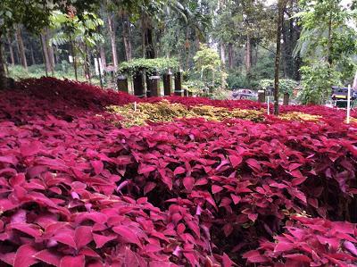 Menawan | Foto: titissoeparno.blogspot.co.id