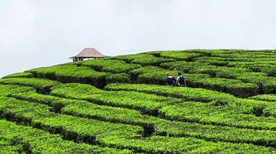 Seperti Labirin | Foto: Instagram @explore.bali.eastjava