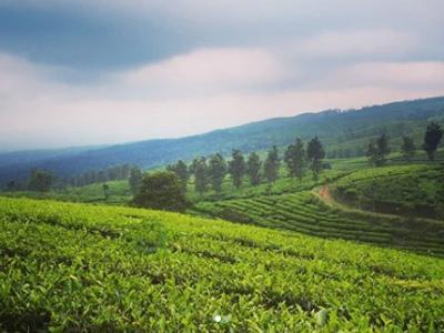 Memang Keren | Foto: Instagram @lumajang.punya