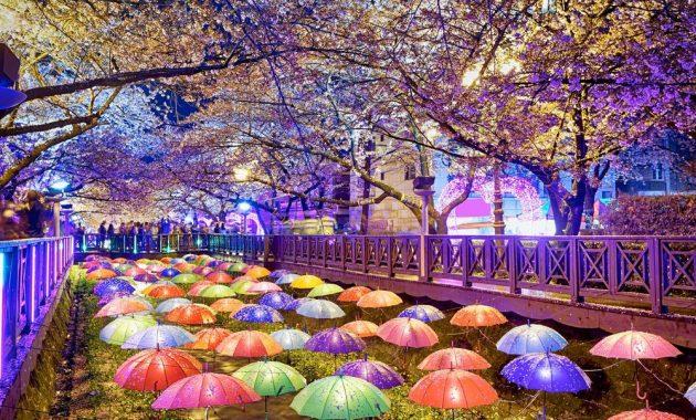 Wita Tour Korea