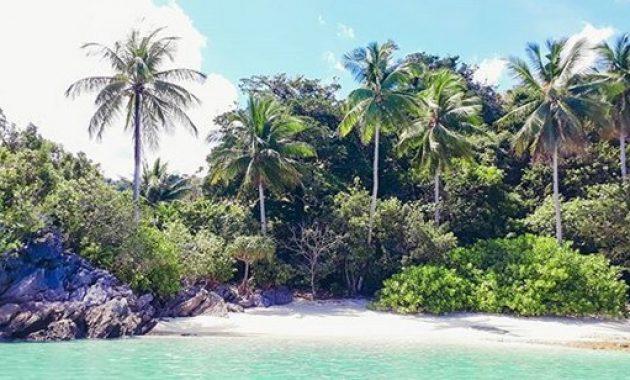 10 Gambar Taman Nasional Teluk Cendrawasih Papua Harga Tiket Masuk Fasilitas Dimana Letak Wisata Jejakpiknik Com