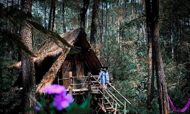 10 Gambar Taman Buru Masigit Kareumbi Kawasan Konservasi Bandung Jawa Barat Jejakpiknik Com
