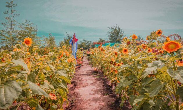 Taman bunga asri kebun mawar di jogja sleman lembang bantul yogyakarta bayat klaten kayu aro kerinci kabupaten jambi regency special region of sanden celosia linggo pekalongan jawa tengah kebon central java daerah istimewa indah dan lembah serang yang yg