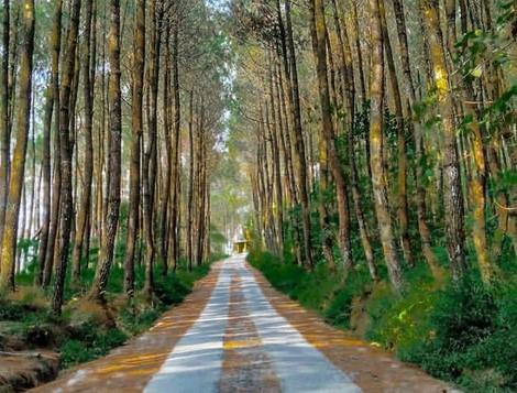 10 Gambar Top Selfie Hutan Pinus Kragilan Magelang, Alamat Wisata Rute  Jalan Menuju Lokasi | JejakPiknik.com